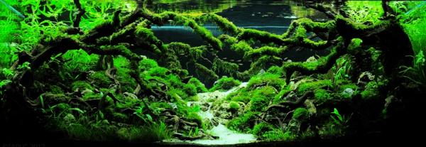 世界水草レイアウトコンテスト20126