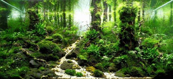 世界水草レイアウトコンテスト2012 10