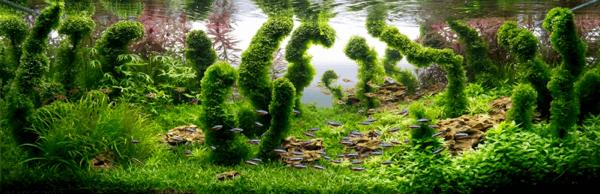 世界水草レイアウトコンテスト2012 18