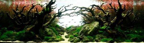 世界水草レイアウトコンテスト2012 21