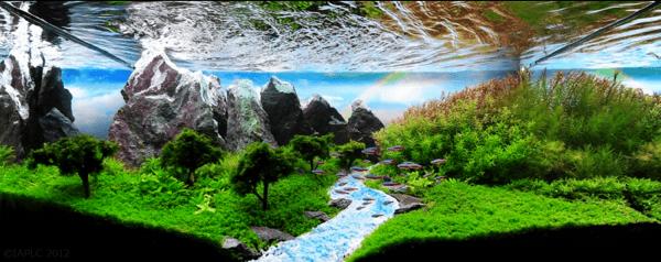 世界水草レイアウトコンテスト2012 8