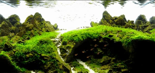 世界水草レイアウトコンテスト2012 12