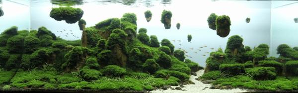 世界水草レイアウトコンテスト2012 15