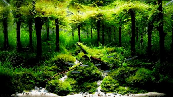 世界水草レイアウトコンテスト2012 17