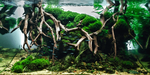 世界水草レイアウトコンテスト2012 20