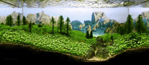 世界水草レイアウトコンテスト20122