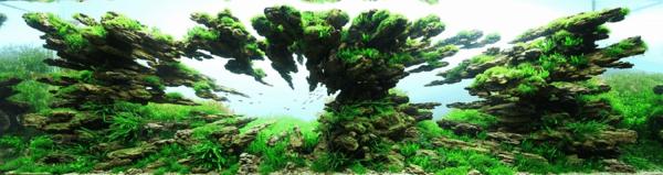 世界水草レイアウトコンテスト20125