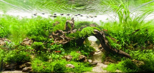 世界水草レイアウトコンテスト2012 9