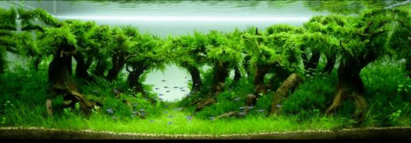 世界水草レイアウトコンテスト2012 13