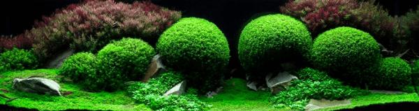 世界水草レイアウトコンテスト2012 19