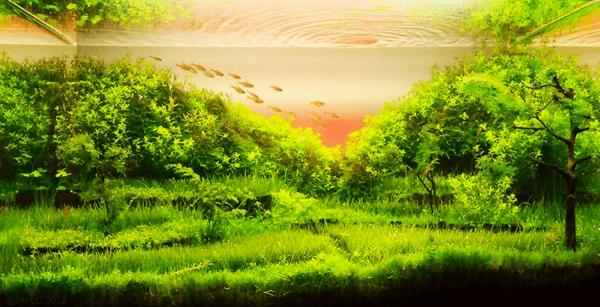 世界水草レイアウトコンテスト2012