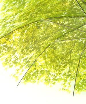 いつでも木漏れ日の中にいることが出来る傘「木漏れ日傘」4