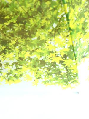 いつでも木漏れ日の中にいることが出来る傘「木漏れ日傘」5