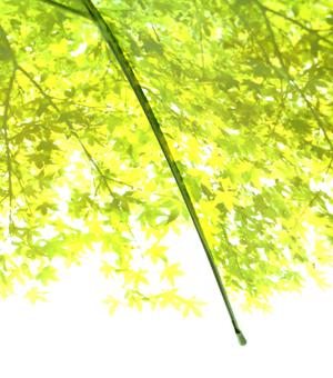 いつでも木漏れ日の中にいることが出来る傘「木漏れ日傘」10