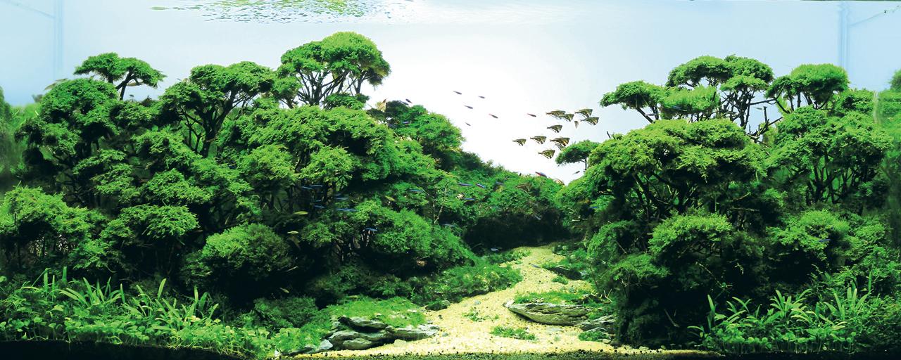 世界水草レイアウトコンテスト2012受賞作品27