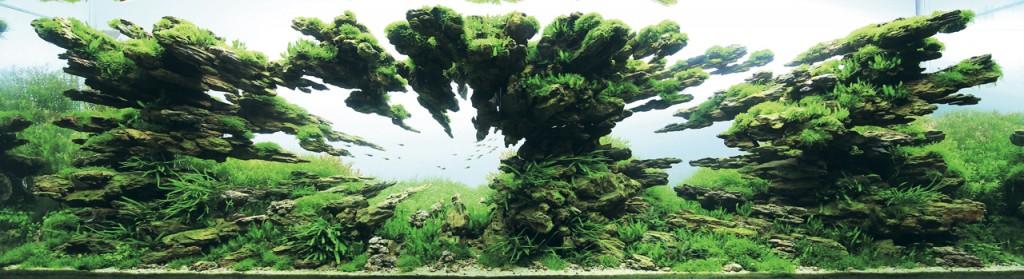 世界水草レイアウトコンテスト2012受賞作品25