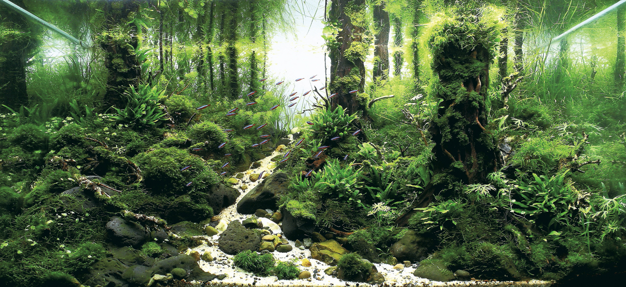 世界水草レイアウトコンテスト2012受賞作品24