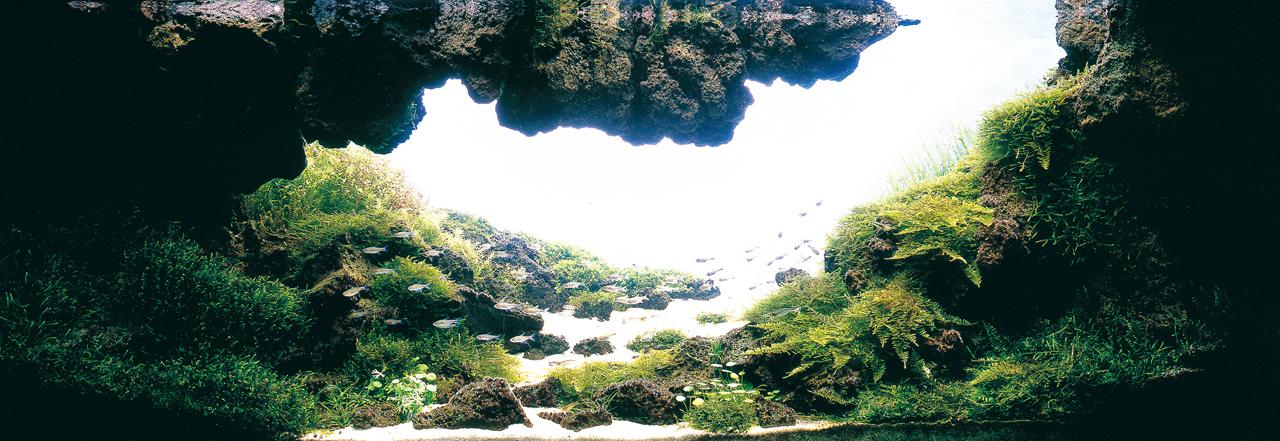 世界水草レイアウトコンテスト2012受賞作品23