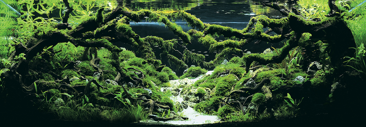 世界水草レイアウトコンテスト2012受賞作品22