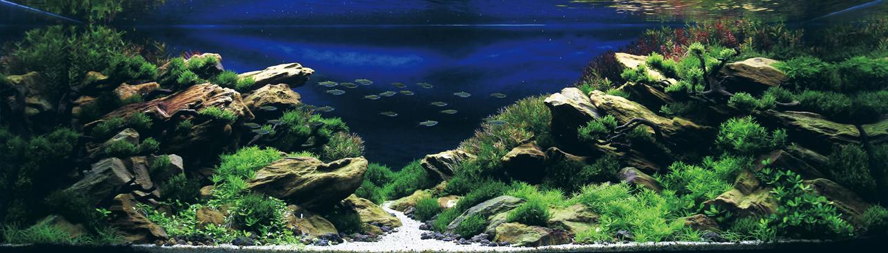 世界水草レイアウトコンテスト2012受賞作品21