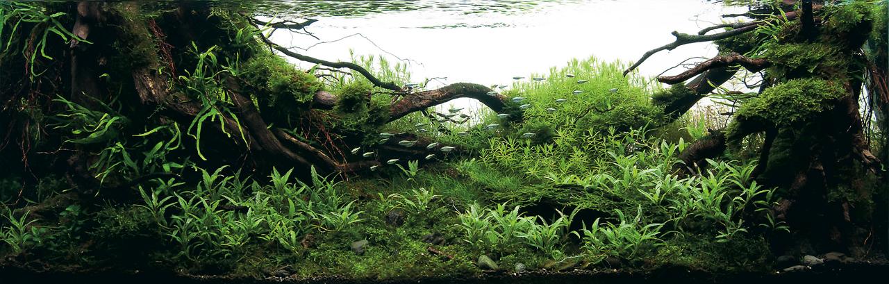 世界水草レイアウトコンテスト2012受賞作品20