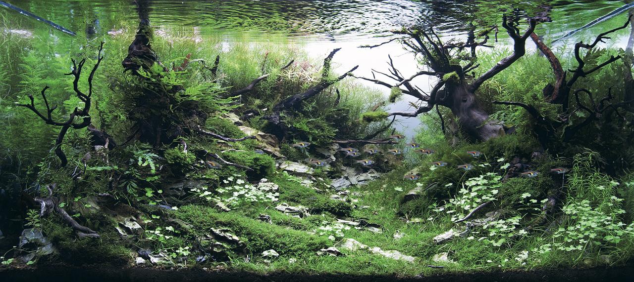 世界水草レイアウトコンテスト2012受賞作品19