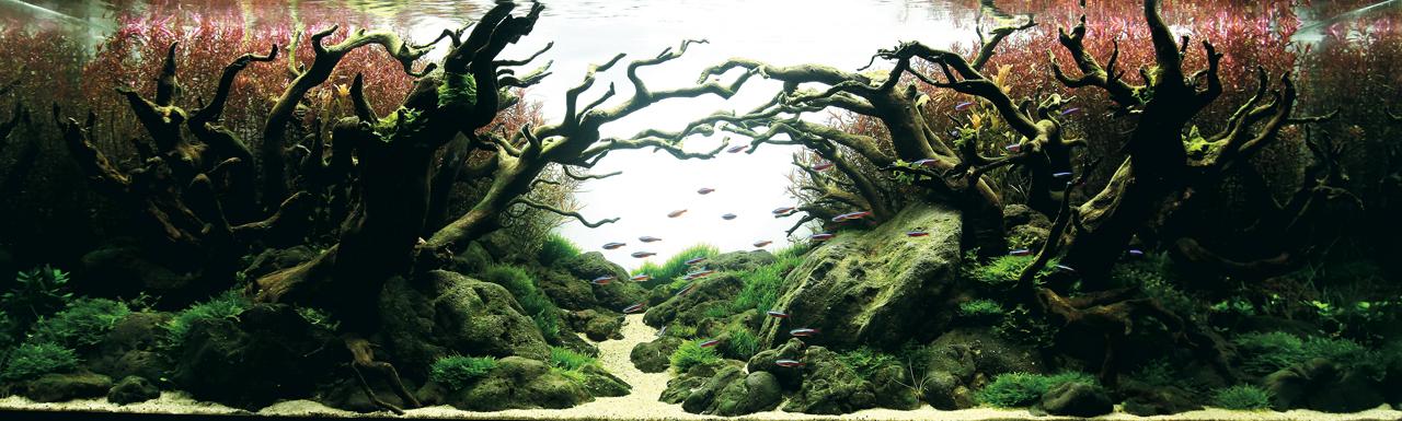 世界水草レイアウトコンテスト2012受賞作品18