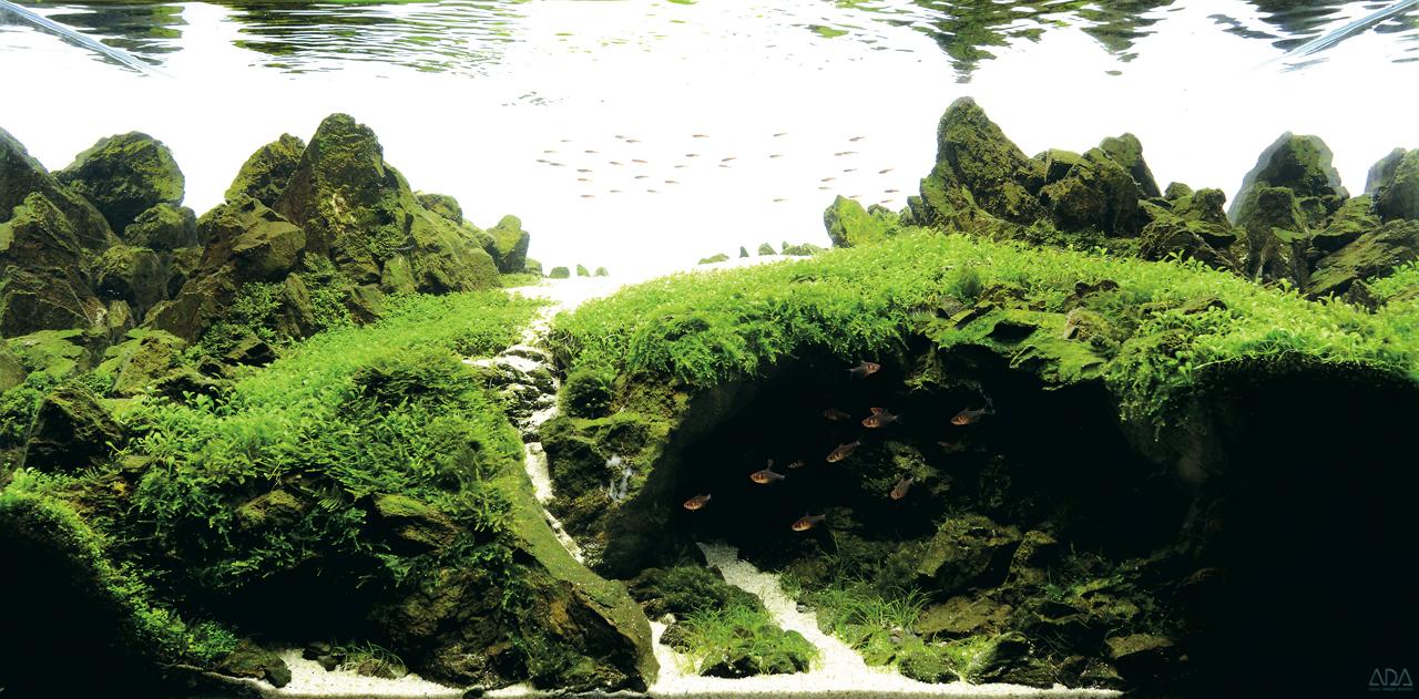世界水草レイアウトコンテスト2012受賞作品17