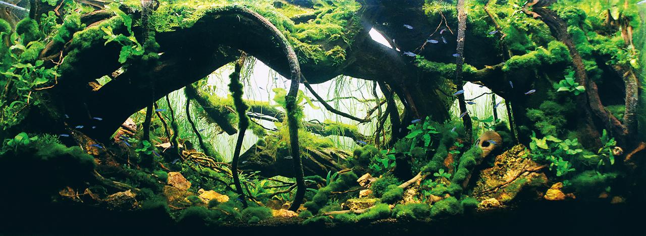世界水草レイアウトコンテスト2012受賞作品16
