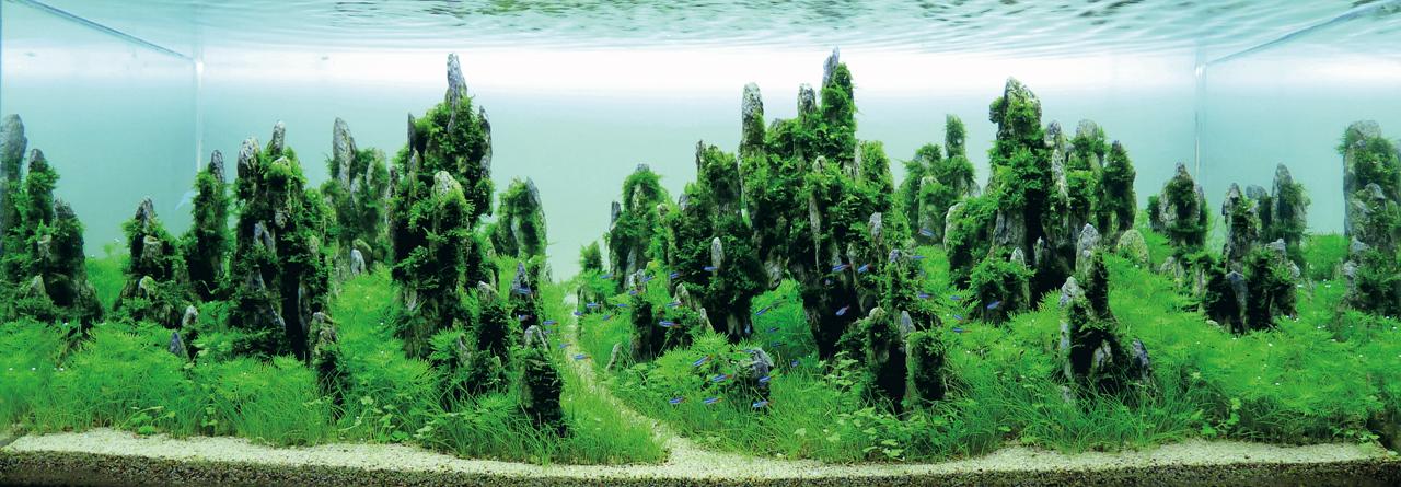 世界水草レイアウトコンテスト2012受賞作品15