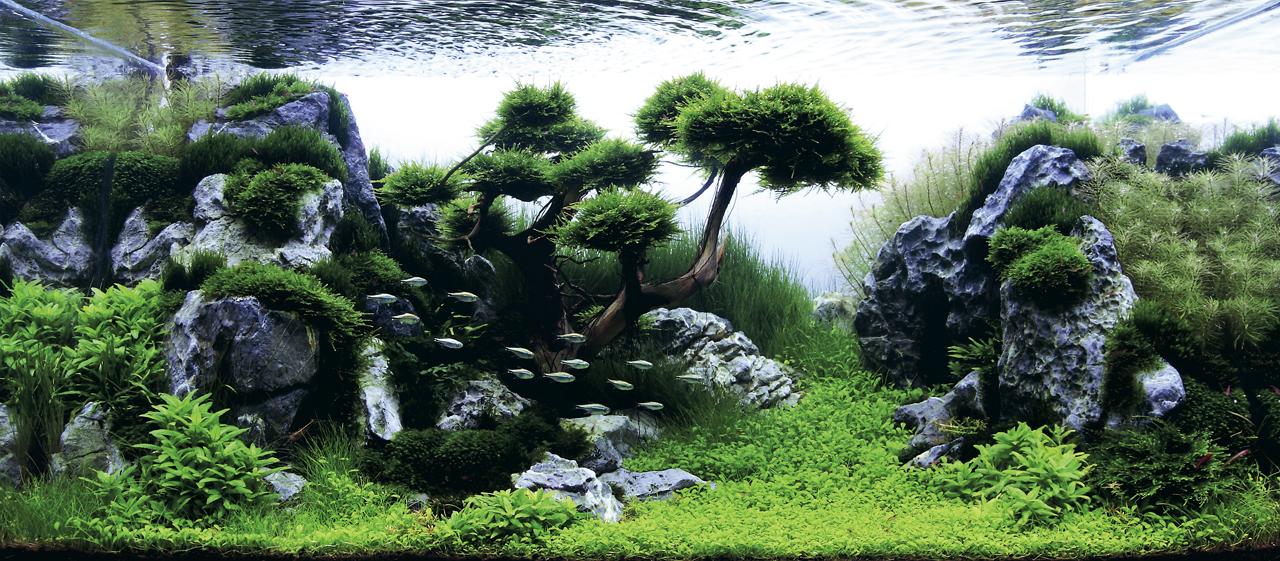 世界水草レイアウトコンテスト2012受賞作品14