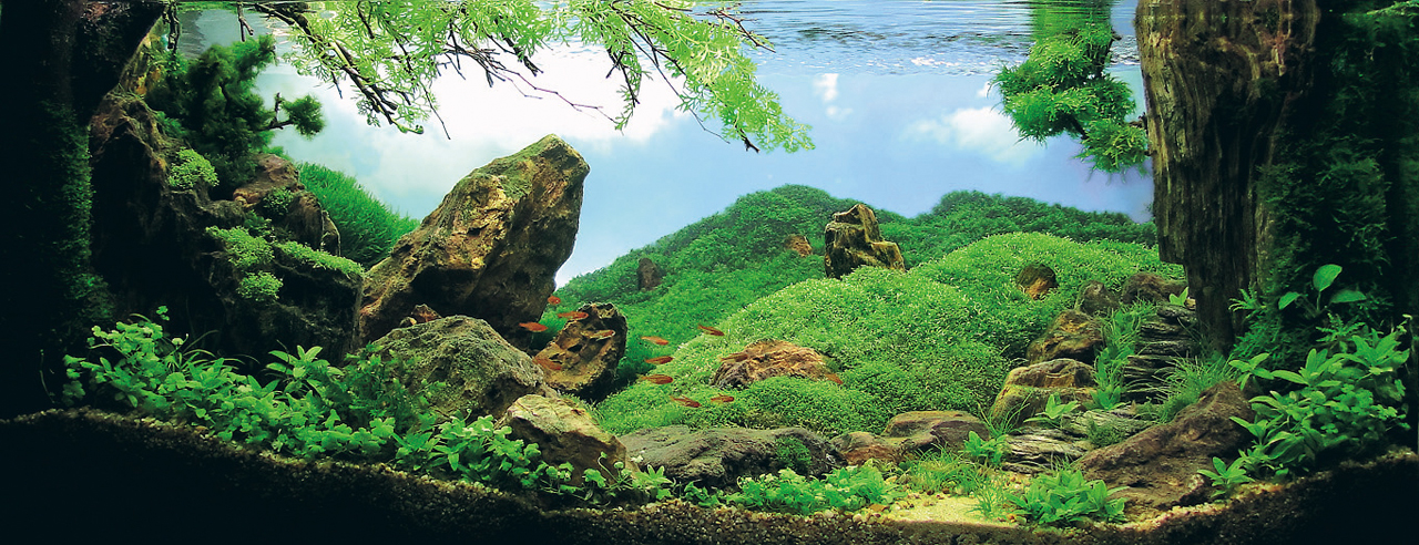 世界水草レイアウトコンテスト2012受賞作品13