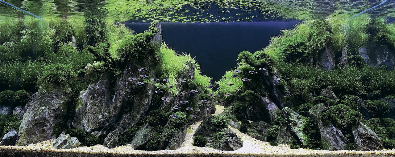 世界水草レイアウトコンテスト2012受賞作品12
