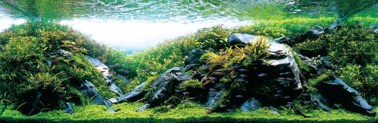 世界水草レイアウトコンテスト2012受賞作品11