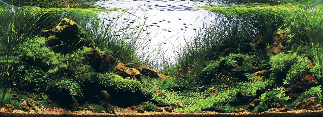 世界水草レイアウトコンテスト2012受賞作品10