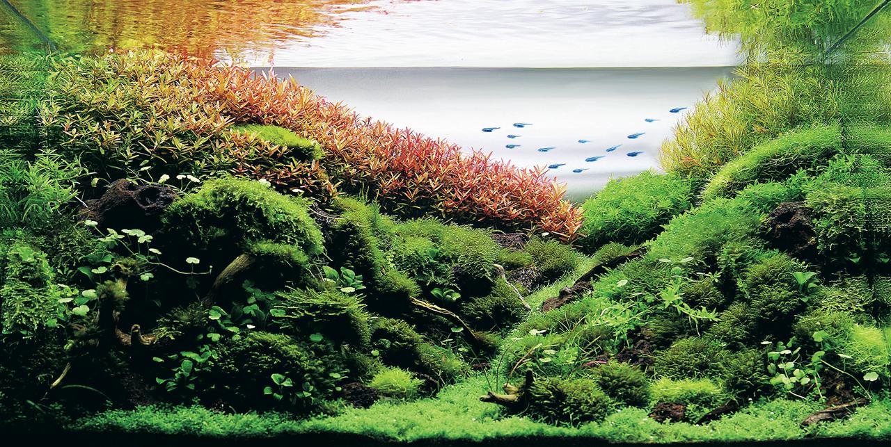 世界水草レイアウトコンテスト2012受賞作品9