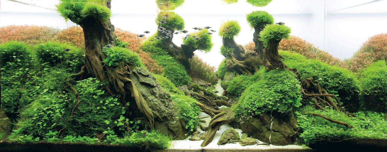 世界水草レイアウトコンテスト2012受賞作品8