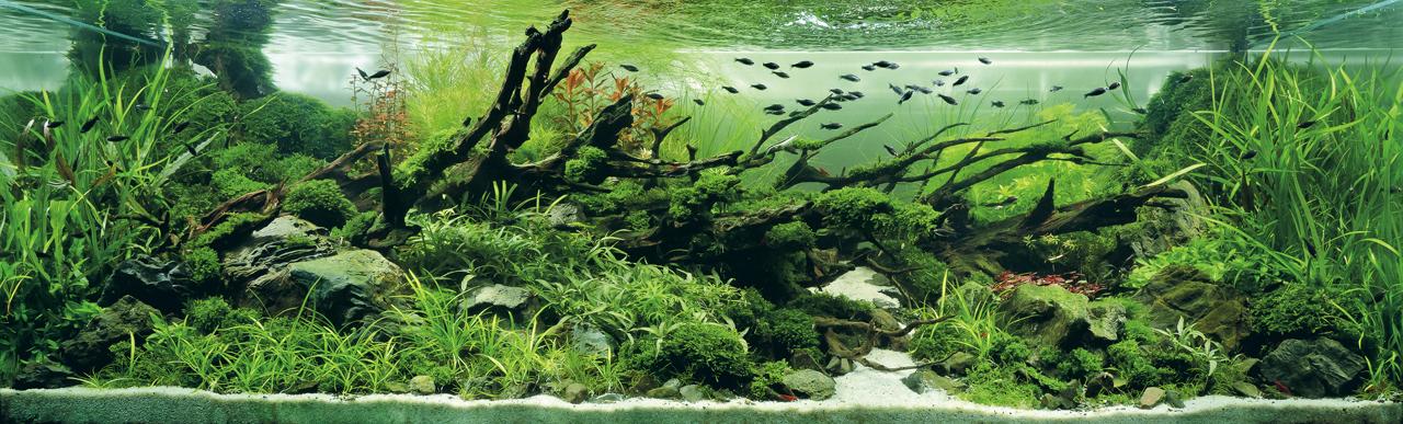 世界水草レイアウトコンテスト2012受賞作品7