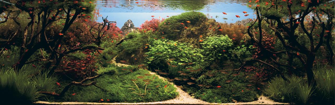 世界水草レイアウトコンテスト2012受賞作品6