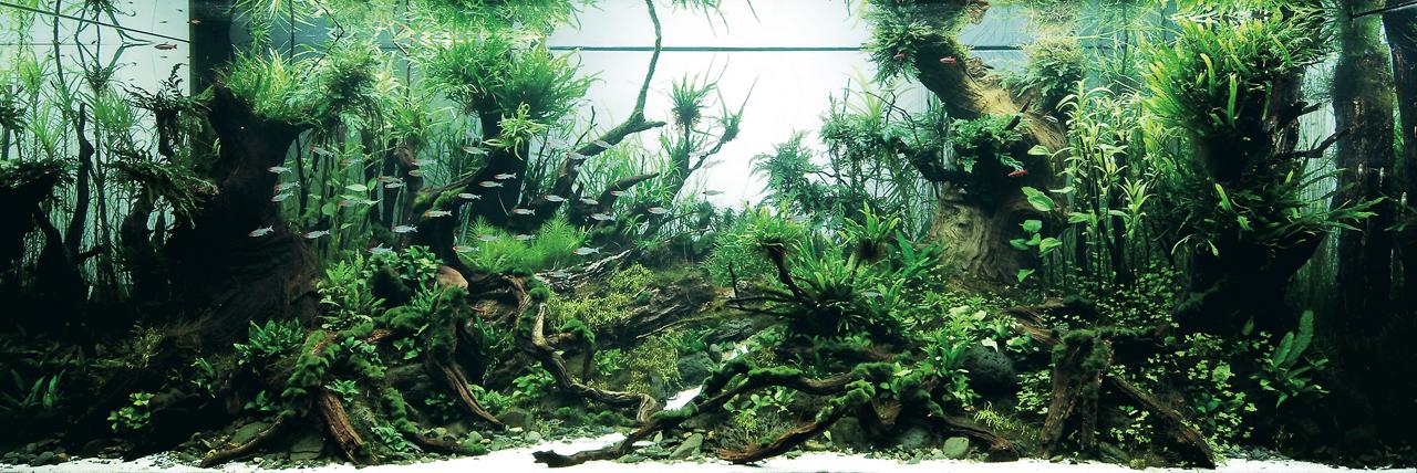 世界水草レイアウトコンテスト2012受賞作品5