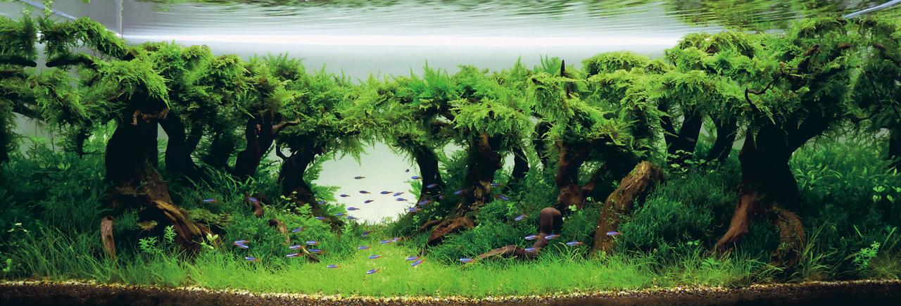 世界水草レイアウトコンテスト2012受賞作品3