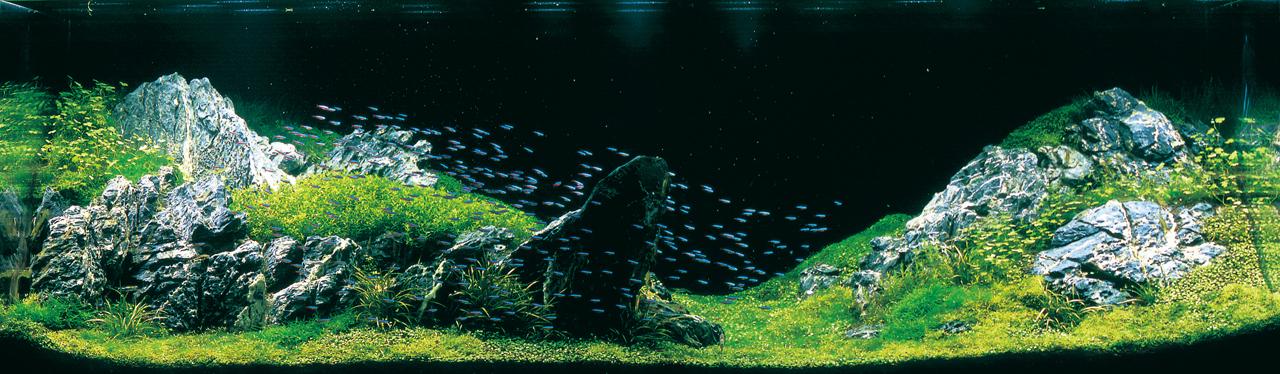 世界水草レイアウトコンテスト2012受賞作品2
