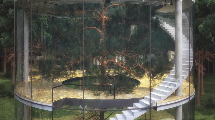 見た目にも美しい、ガラス張りのツリーハウス「Tree in the house」4