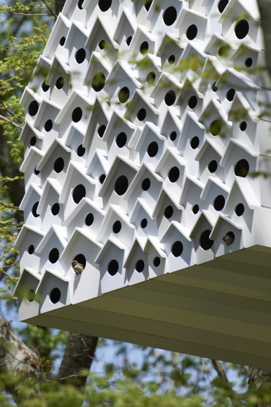 bird-apartment55_MasayaYoshimura