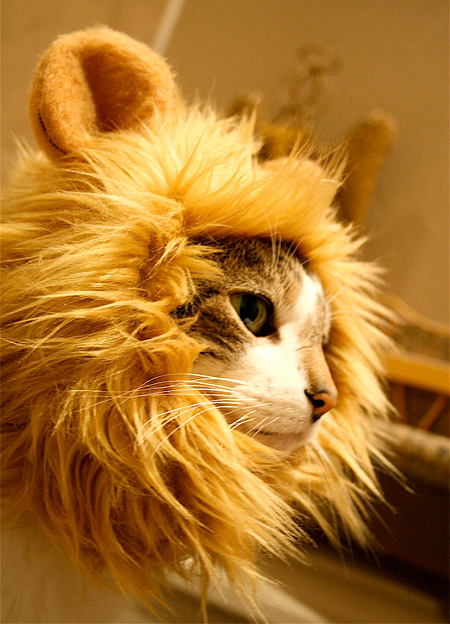 lioncat03
