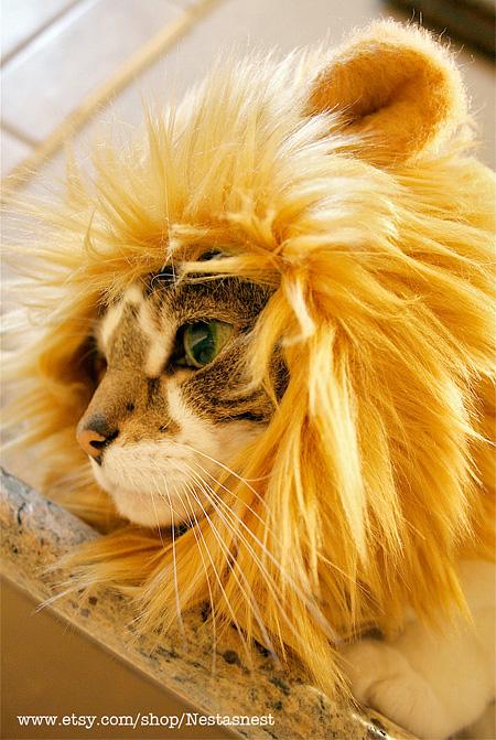lioncat05