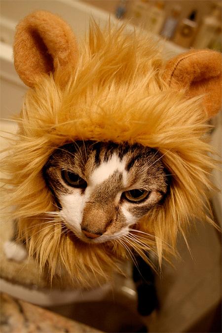 lioncat06