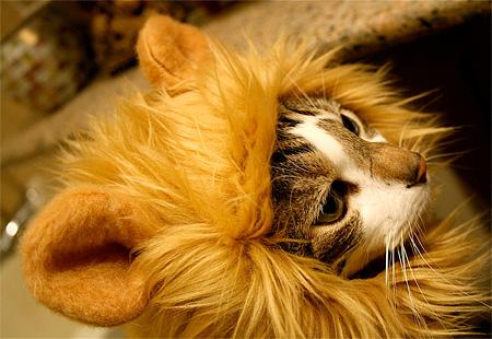 lioncat07