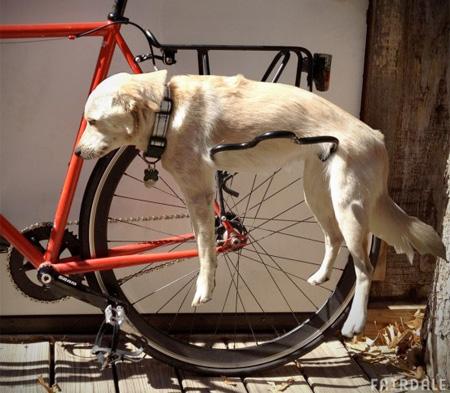 dograck02