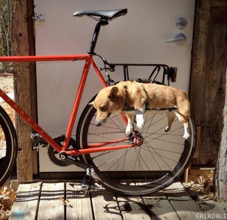 dograck05